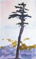 Pine, watercolor, 8 x 4.5 in.